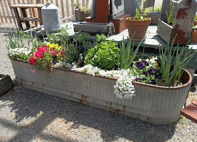 AMAZING RUSTY HORSE WATER TROUGH FILLED  WITH BULBS AND PERENNIALS
