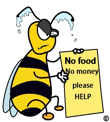 Just like humans, bees are programmed to seek out sweet things, their love of sweet things is causing their downfall......  Click to heed the WARNING - a sweet tooth is a bee killer
