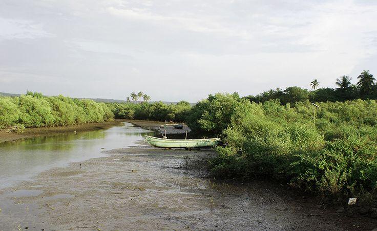 Creek at Vengurla - Architecture BRIO, India  #fishing, #nature