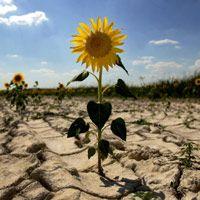 El país aún no garantiza su sostenibilidad ambiental