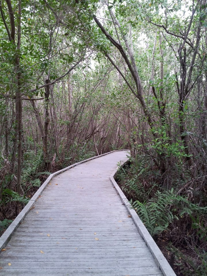 Path to Tigertail beach and marsh at Marco Island, Florida