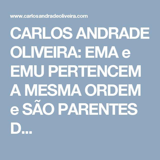 CARLOS ANDRADE OLIVEIRA: EMA e EMU PERTENCEM A MESMA ORDEM e SÃO PARENTES D...