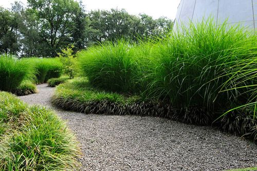 """Great big bed of grasses! Grow quickly, need little maintenance and water. They also make a lovely """"swaying"""" sound in the wind. Against the house and top of Berm."""