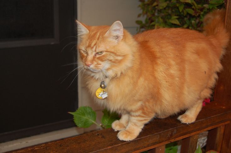 Orange tabby cat style Pinterest Tabby cats, Orange