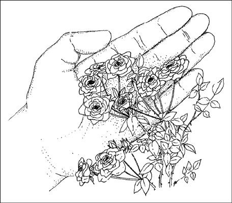 87 best my austin garden images on pinterest for Indoor gardening for dummies