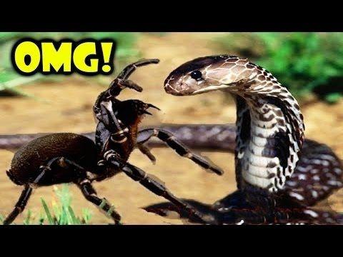 야생 동물 싸움🌟사자 공격 뱀, 독수리 뱀 🌟 가장 놀라운 야생 동물의 공격 🌟 미친 동물 싸움을 먹어