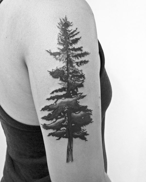 matt matik again. that is a very nice organic tree.  my favorite tree other than weed.. back of lower leg i feeel that
