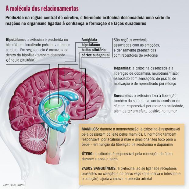 Estudo mostra que a Oxitocina melhora função cerebral em crianças com autismo. | Fórmula Ativa