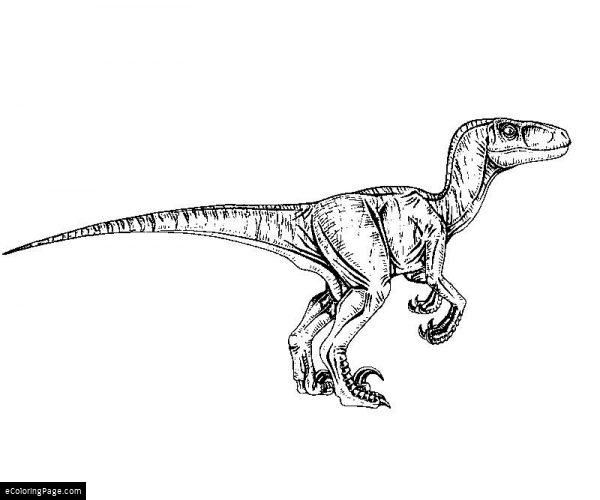 Jurassic Park Velociraptor Coloring Page Adult Coloring