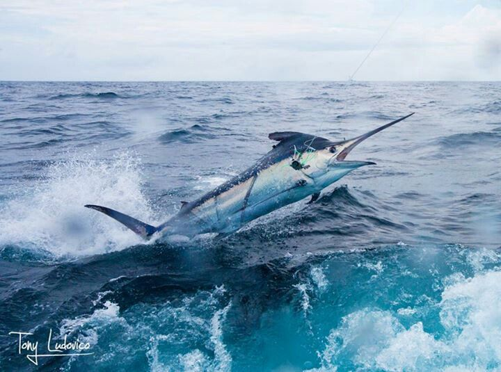 322 best images about fishing on pinterest mahi mahi for Deep sea fishing california