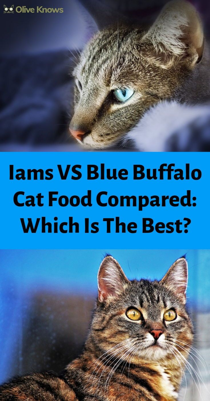 Iams Vs Blue Buffalo Cat Food Compared Which Is The Best Cat