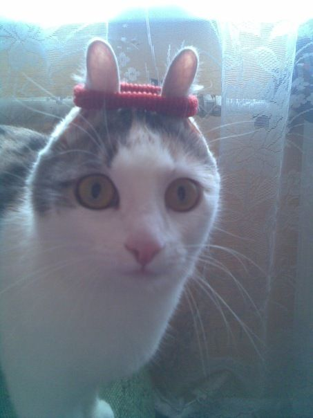 cat: Rabbit, Animal Pictures, Funny Cat, Easter Bunnies, Hair Ties, Ears, Crazy Cat, Funny Animal, So Funny