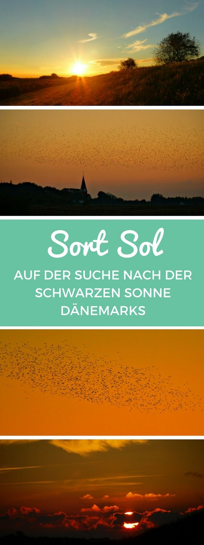 """Die """"Schwarze Sonne"""" – auf dänisch Sort Sol – ist eines der größten Naturschauspiele Dänemarks. Bevor sie sich im dänischen Marschland für die Nacht niederlassen, versammeln sich hunderttausende Stare und verdunkeln mit ihren bizarren Flugformationen die untergehende Sonne. #sortsol #schwarzesonne #dänemark"""