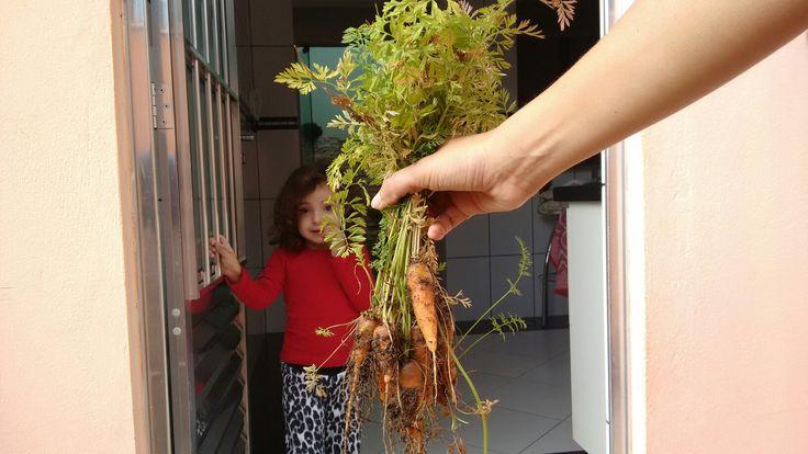 Plantamos, colhemos e comemos! Cenouras da Aline!!!