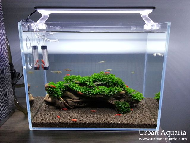 """This is my first nano tank... its actually just meant as a temporary tank to hold fishes and shrimps while my larger """"showcase"""" tank was und..."""