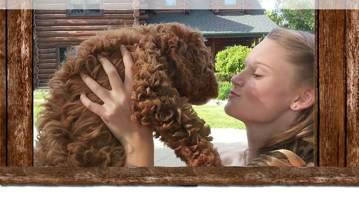 Labradoodle Puppies For Sale | Breeder Adoption WI | Australian Labradoodles | Hypoallergenic Poodle Mix Midwest | Doodle Videos Pictures | Poodle x Labrador Cross Milwaukee Madison Chicago | Hartford, WI, USA | The Labradoodle Corral Wisconsin
