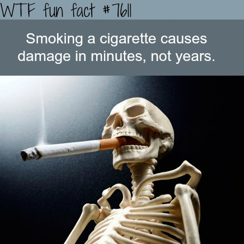 Damage from smoking starts afters minutes, not years - WTF fun facts