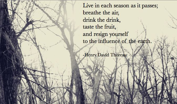 Live each season as it passes; Breath the air, drink the drink, taste the fruit and resign yourself to the influences of the earth. Thoreau