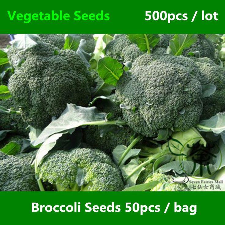 Широко культивируется брокколи семена 500 шт., Мини сад съедобные зеленые растения семена овощных культур, Однолетние травы из капусты Oleracea семена