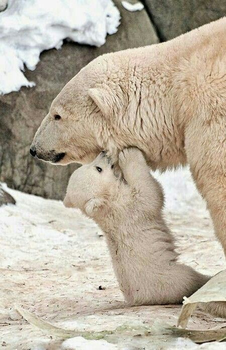 Fiesty Cub Biting Mom!