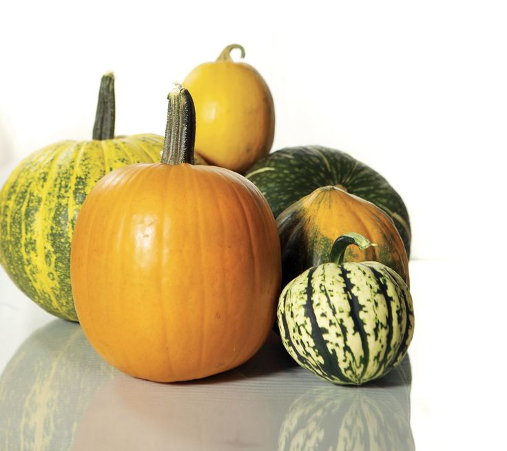 Best pumpkin varieties for cooking. However you cook them, savory pumpkins and squash offer loads of color, flavor and nutrition. Many heirloom pumpkins and squash varieties have excellent cooking qualities, too. From MOTHER EARTH NEWS magazine.