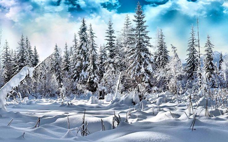 χιόνι δάσος διανυσματικό