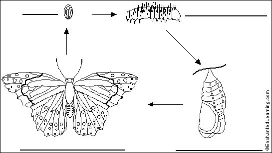 Label Butterfly Life Cycle Printout