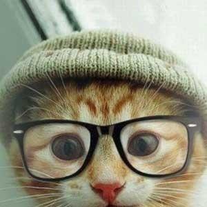 Hipster cat = the OmbuShop spirit animal