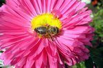 How to Get Rid of Sweat Bees Around a Pool (4 Steps) | eHow