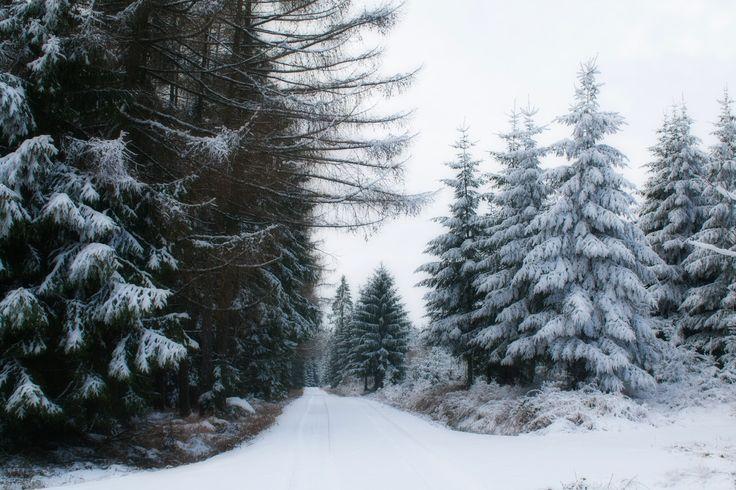 Winter Wonderland II - Winter Wonderland