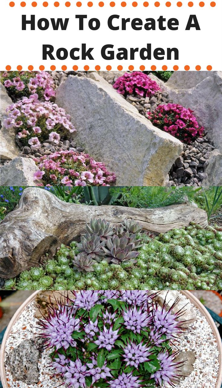 How to create a rock garden: types, how to, and what plants to grow