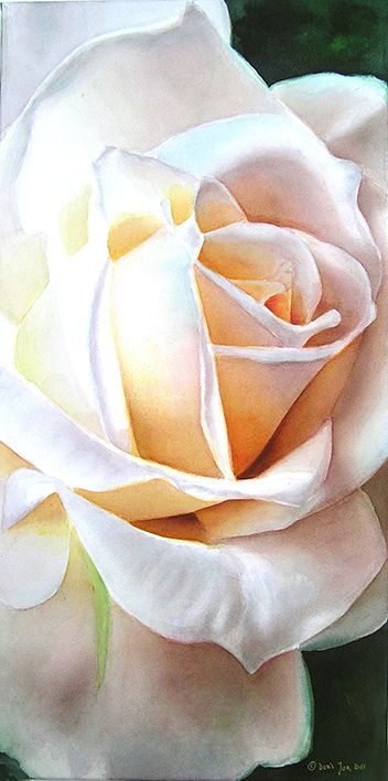 Rose Weiße Weihnacht - white rose painting in watercolor by Doris Joa