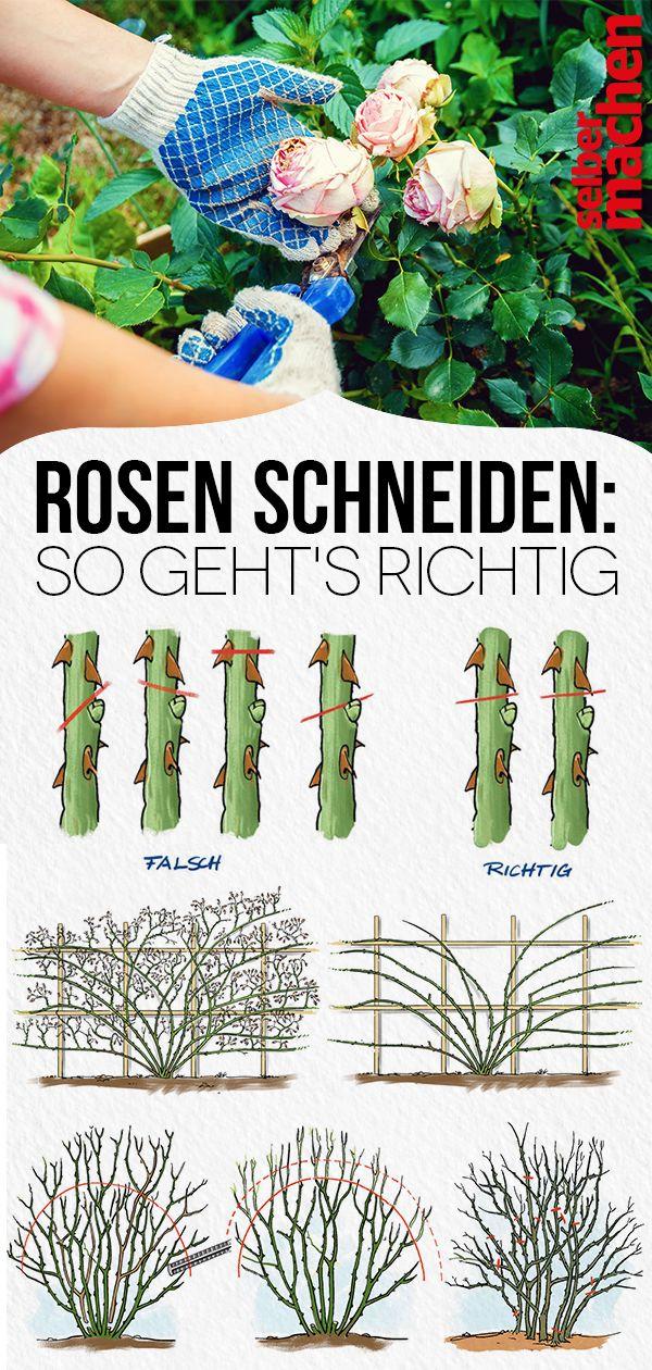 Rosen richtig schneiden   – GARTEN |Gestaltung