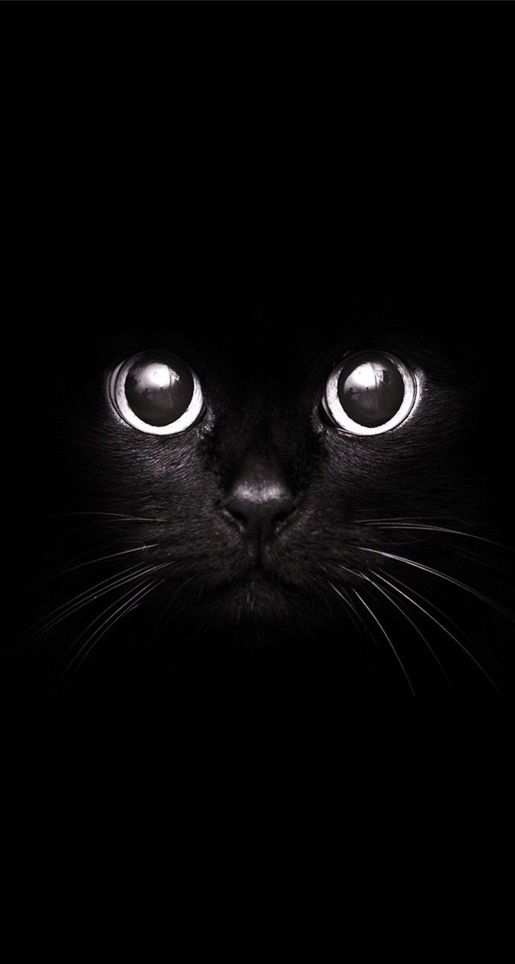 Ojos de gato Más
