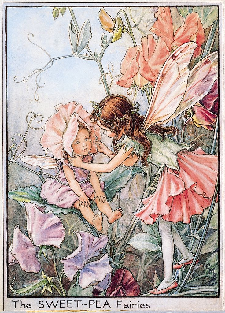 Flower Fairies™ are tiny creatures (the biggest is only 20cm tall) that live in the tree tops, marshes, forest floor, wayside and gardens. Wherever and whenever a seed sprouts, a Flower Fairy baby is born. Each Flower Fairy lives and sleeps in their chosen flower, plant or tree, and as this grows the fairy grows …
