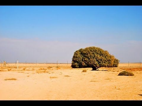 The Blessed Tree (The Only Living Sahabi of Rasulullah Muhammad SAW)