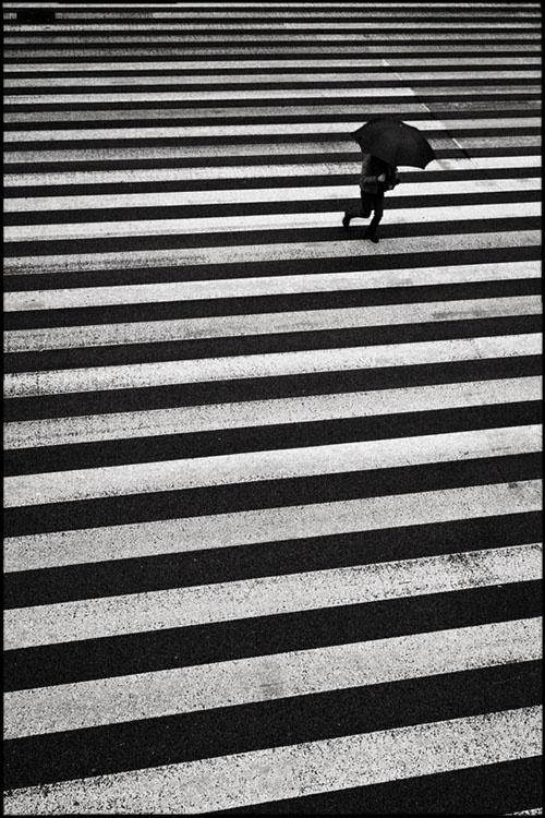 Shin Noguchi •