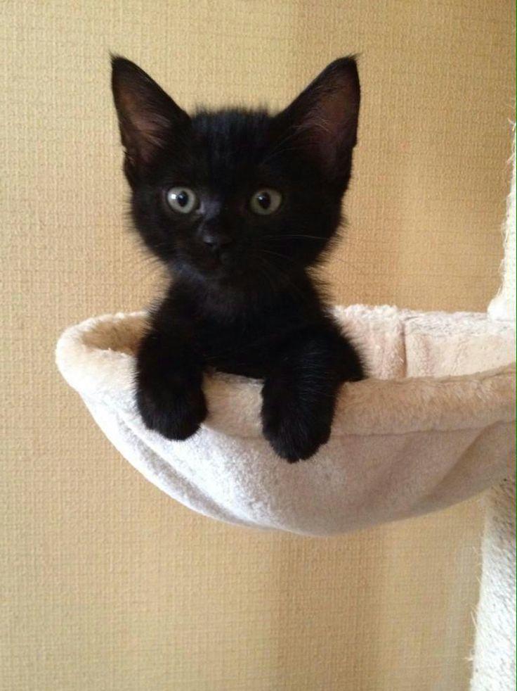 Adorable black kitten!