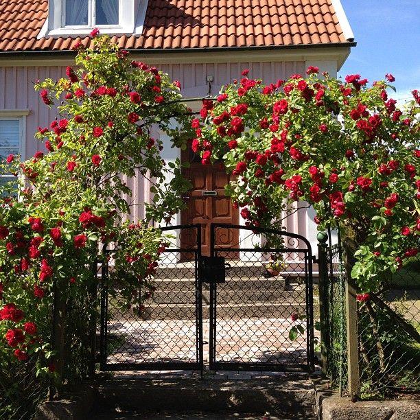 http://inredningsvis.se/instagram-inspiration-klangrosor-i-orgryte/  Roses 2