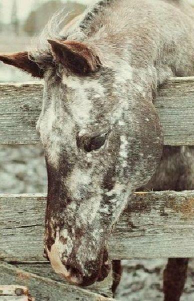 beautiful ♡... Re-pin by StoneArtUSA.com ~ affordable custom pet memorials