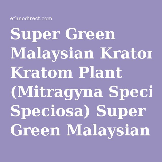 Super Green Malaysian Kratom Plant (Mitragyna Speciosa) Super Green Malaysian Kratom Plants For Sale : EthnoDirect.com, One Stop Ethnobotanical Plant Shop