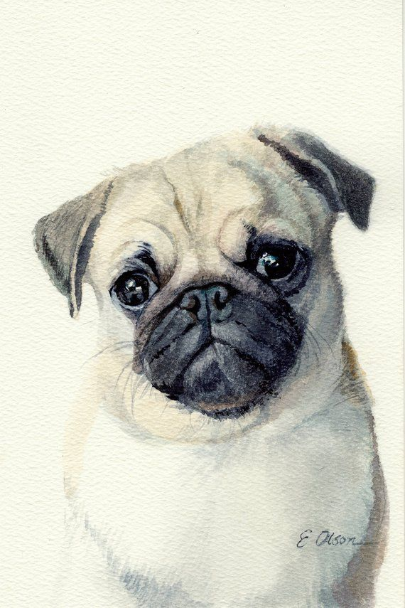 Original Watercolor Pug Painting Watercolor Pug Puppy Painting