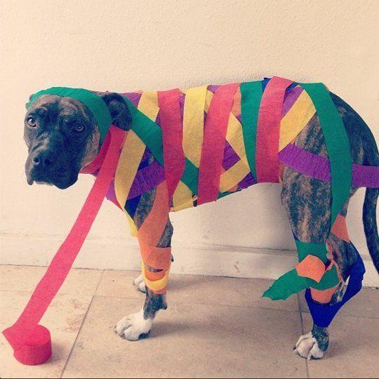 24 Best Animalia Images On Pinterest Adorable Animals