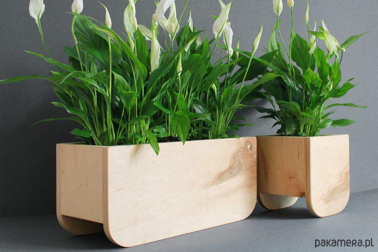 Sansevieria Tough Lady Zielony Parapet Sansevieria Tough Planter Pots