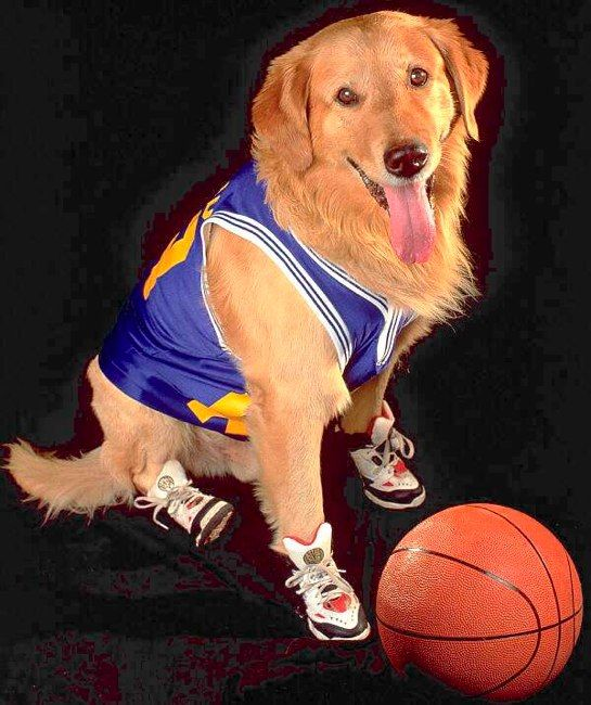 Today we remember AirBud for #NationalDogDay! Thank you for showing us that dog sports matter, we'll never forget you!
