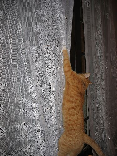 17 Best images about =^..^= Cats love curtains on Pinterest ...
