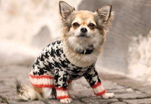 Strikket hundesweater - FamilieJournal.dk Mobil