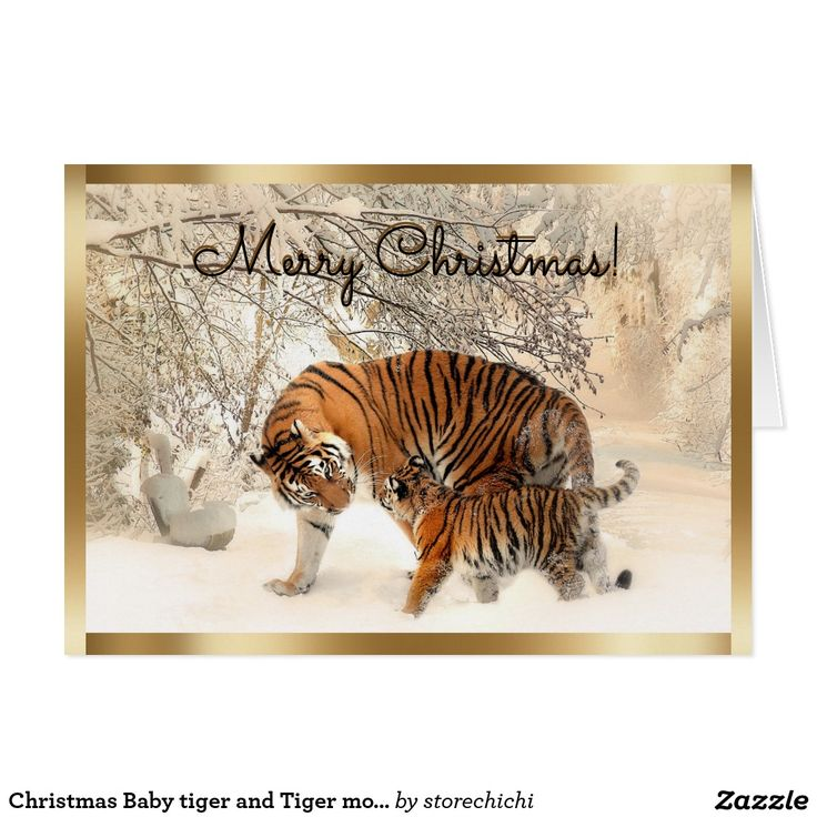 Christmas Baby tiger and Tiger mom in snowy forest