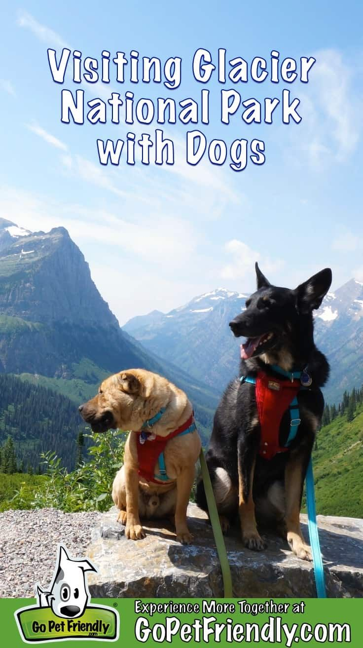 Visiting Glacier National Park With Dogs and Nearby Pet Friendly Activities