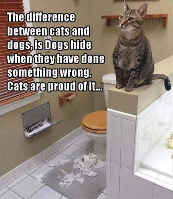 :) Yes thats because Dogs think we are their masters and Cats don't tolerate a Master..as they are independent and autonomous and are confident with that knowledge :)